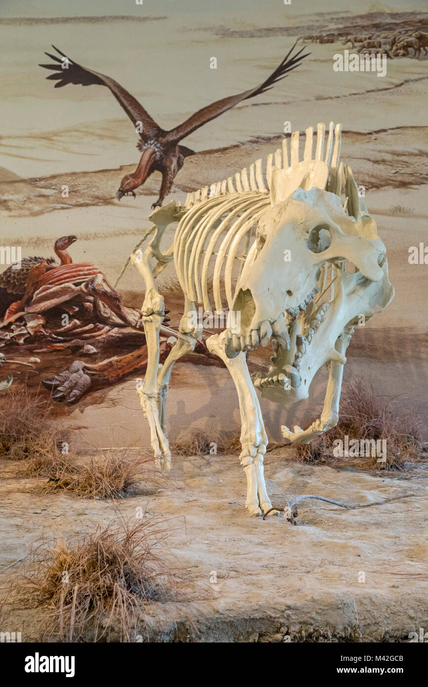 Harrison, Nebraska - Agate Fossil Beds National Monument. The fossilized skeletons of hundreds of ancient animals - Stock Image