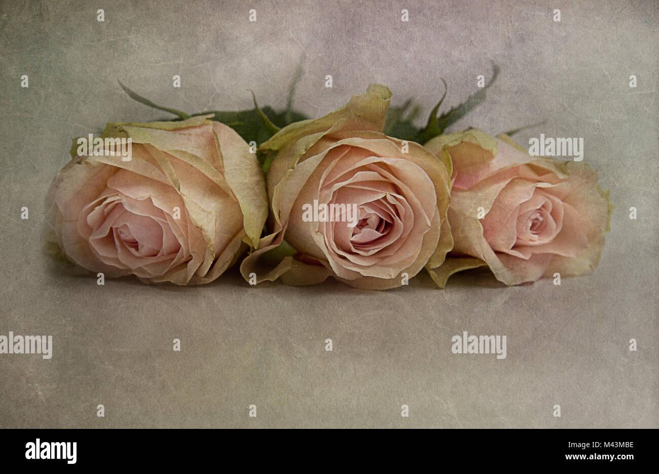 La Vie En Rose Stock Photos & La Vie En Rose Stock Images - Alamy