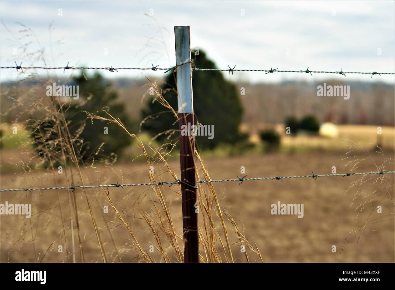 Barbed wire fence on a countryside - Stock Image