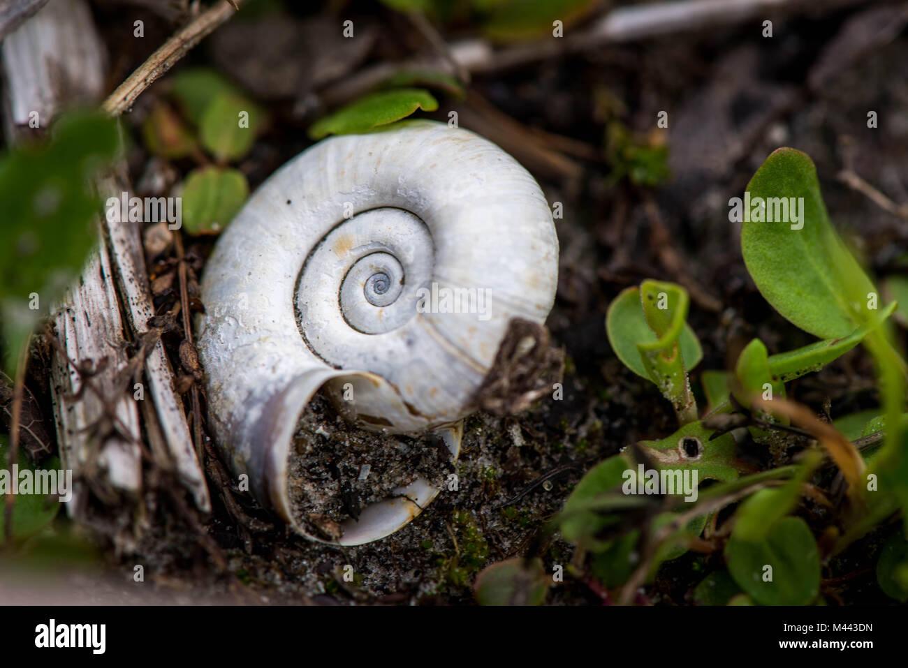 Macro shot of a shell - Stock Image