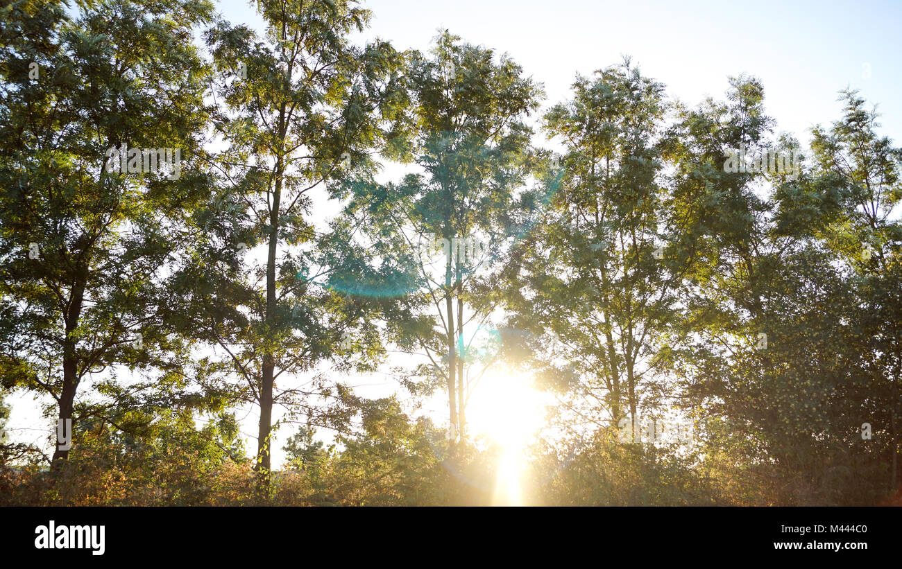 Rays of light filtering through the trees and morning mist at Sunrise causing light glare. - Stock Image