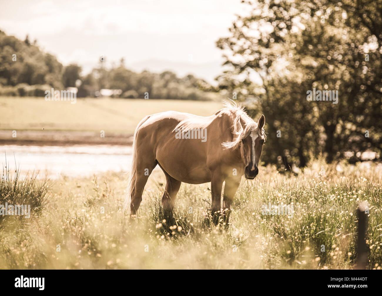 Beautiful Horse - Stock Image