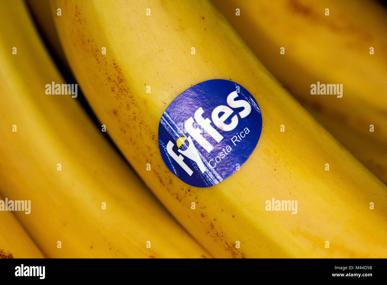 fyffes sticker on a bunch of bananas imported from costa rica - Stock Image
