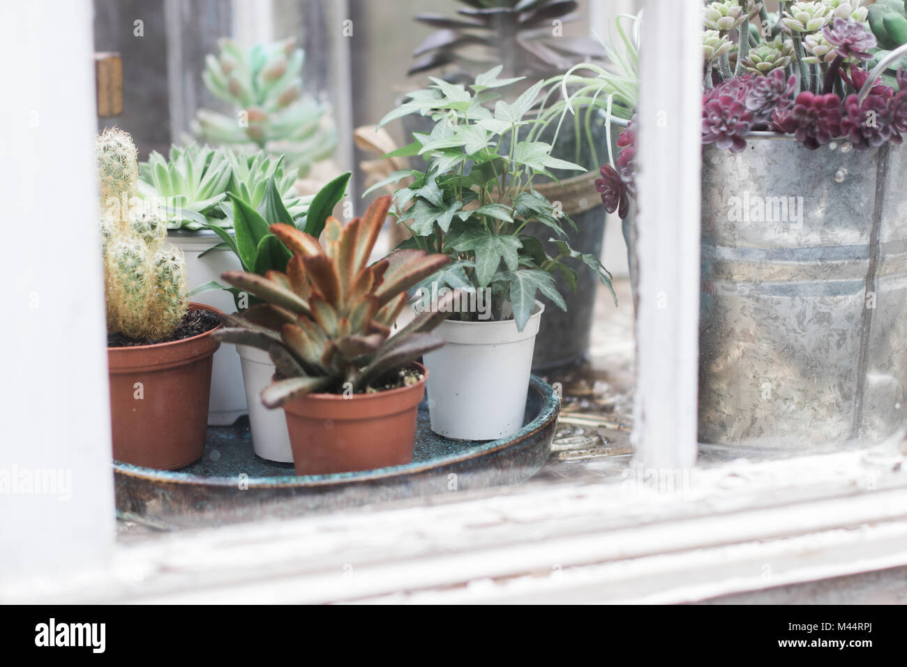 Succulents and tiny plants in natural light Stock Photo