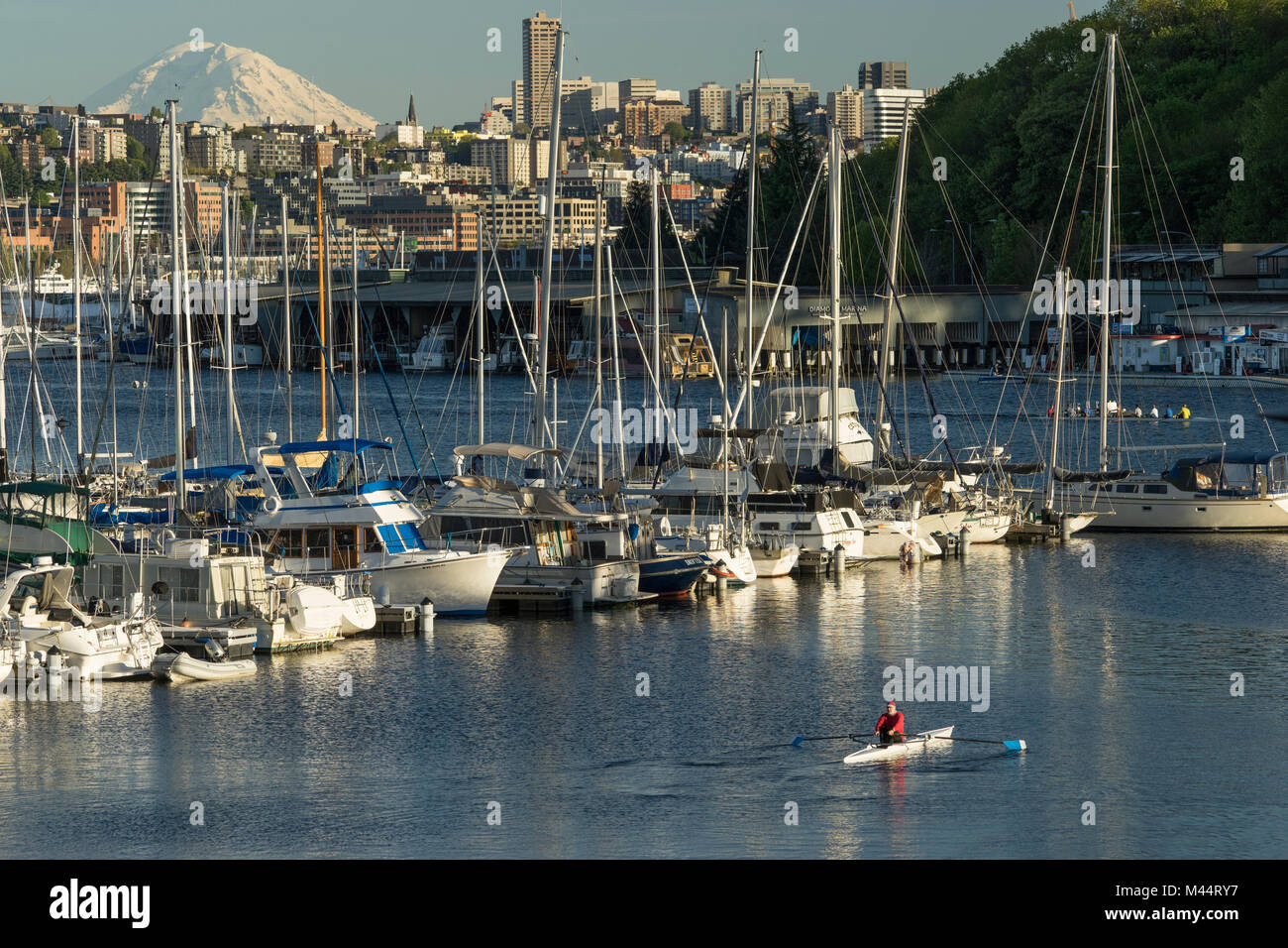 United States, Washington, Seattle, Rowing on Lake Union with the city  and Mount Rainier in the background - Stock Image