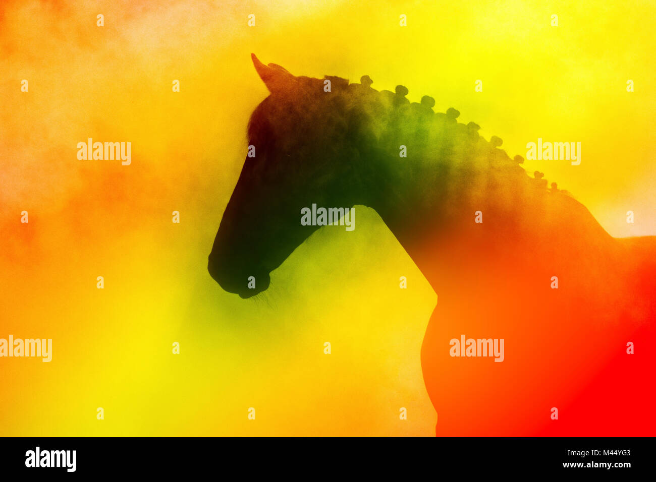 Warmblood horse with special lightning effects using a smoke machine and stage lightning. Netherlands - Stock Image