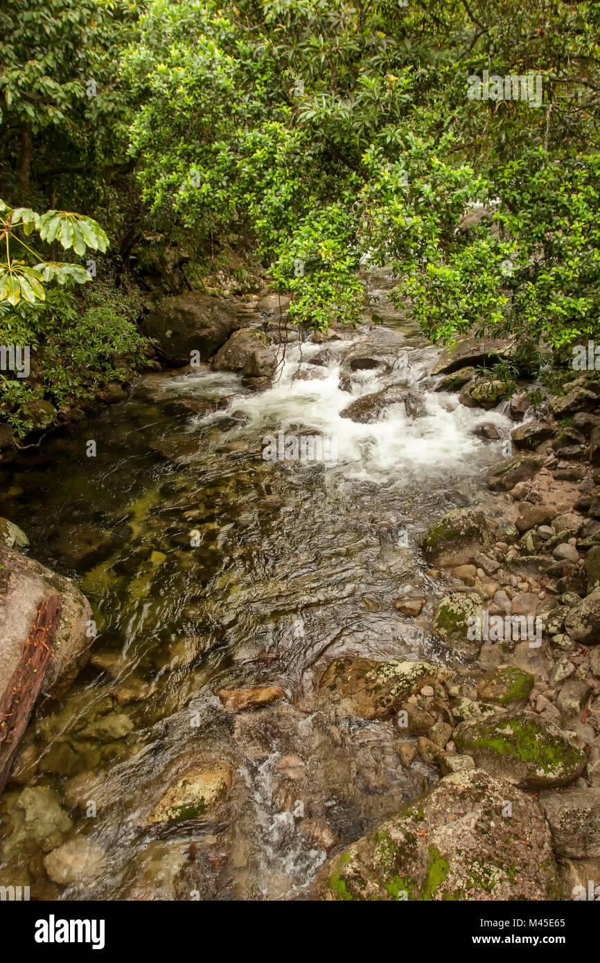 Mossman river at Mossman Gorge,  located in the Daintree National Park -  North Queensland - Australia  rushing - Stock Image