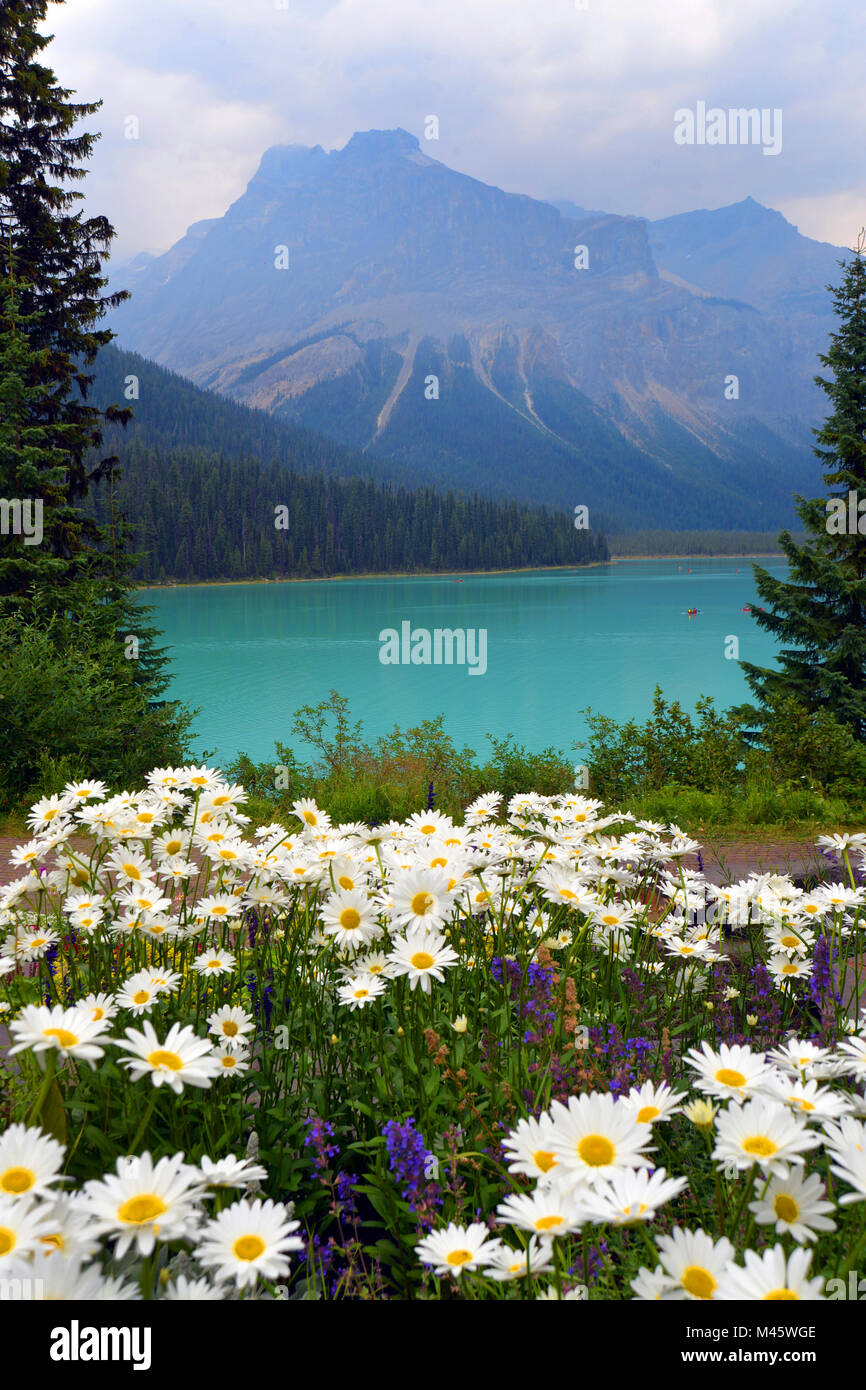Emerald Lake, with colourful summer flowers, Banff, Canadian Rockies. View slightly subdued by the wild fires of - Stock Image