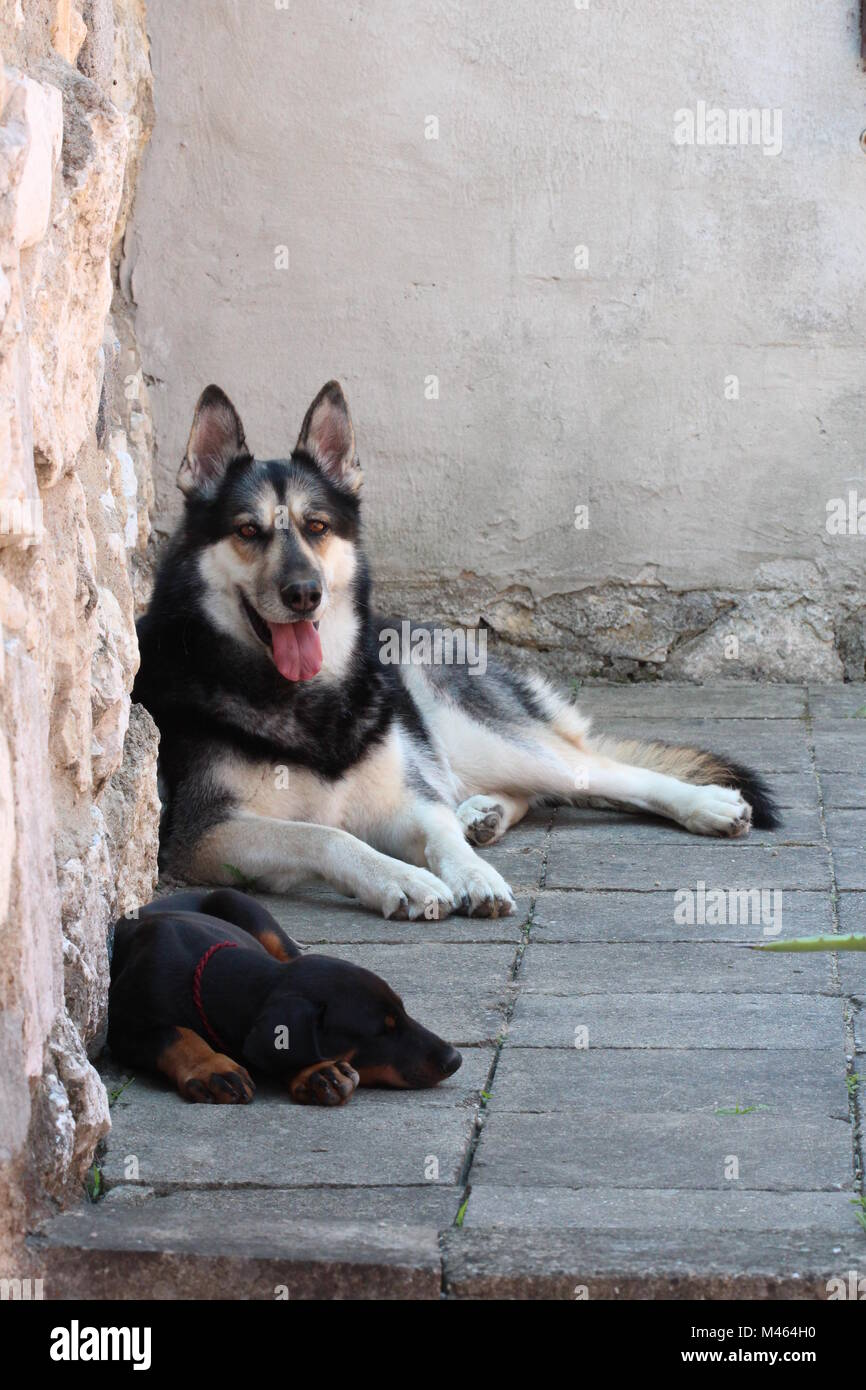 Two dogs - Stock Image