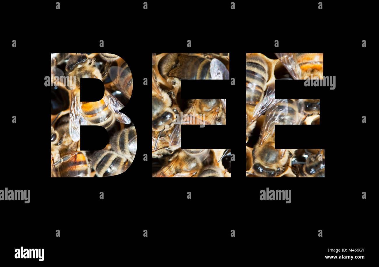 Bee. - Stock Image