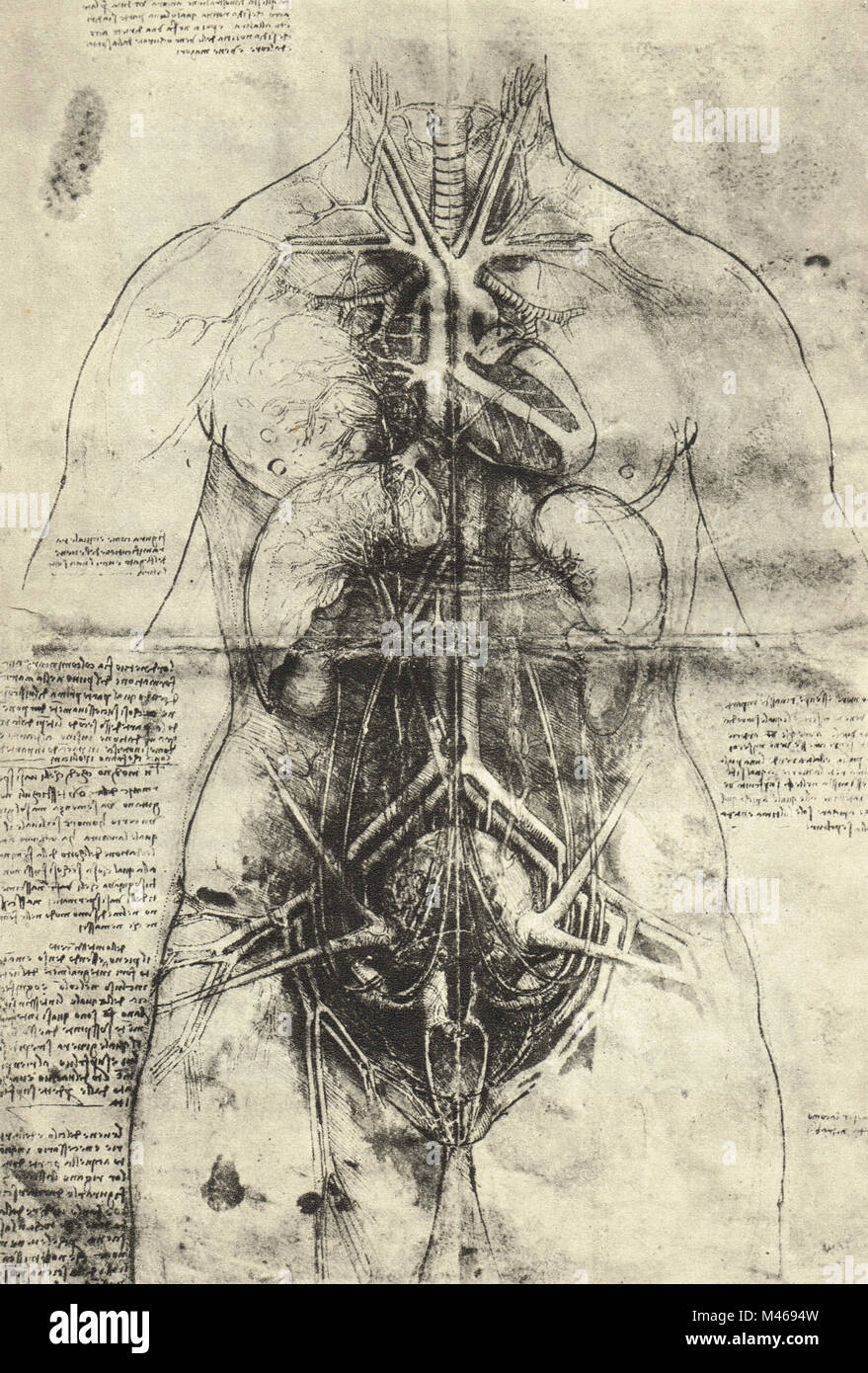 Dissection of the arterial system and principal organs of a woman.   Anatomical drawing by Leonardo Da Vinci, circa - Stock Image