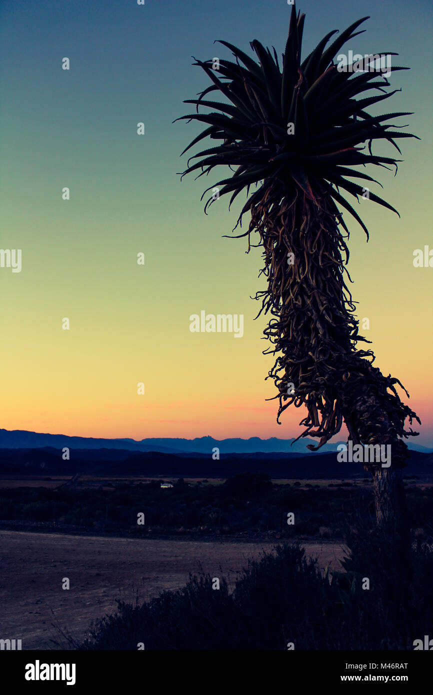 An aloe plant set against a backdrop of the Klein Karoo mountains at twilight in South Africa - Stock Image