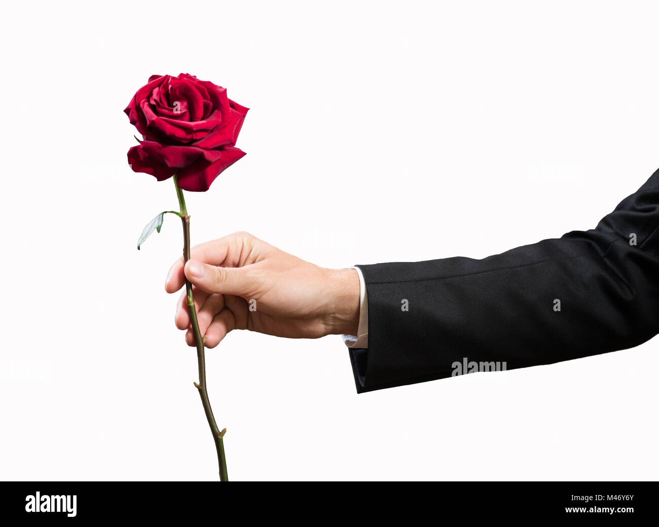 Red rose in the hand of businessman isolated on white - Stock Image