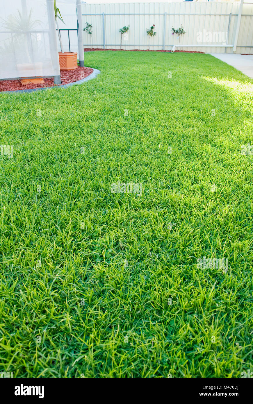 Healthy looking backyard garden lawn, South Australia Stock Photo