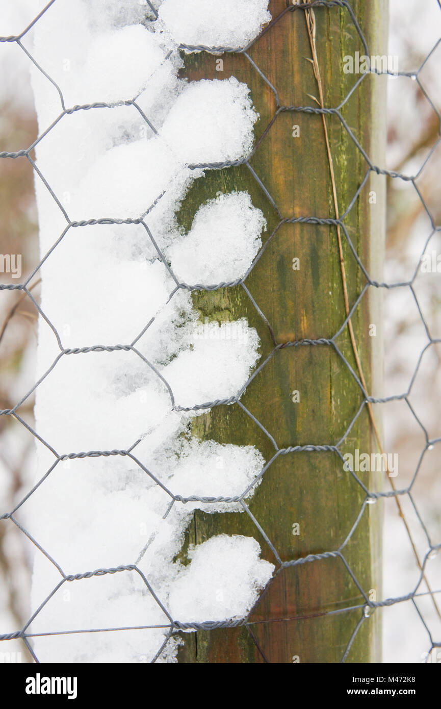 Part of a fence post with chicken wire showing fresh snow Stock ...