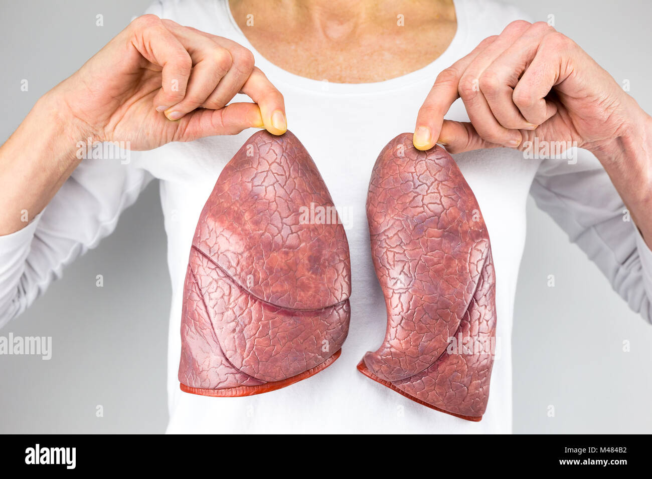 Woman holding two lung models in front of chest - Stock Image