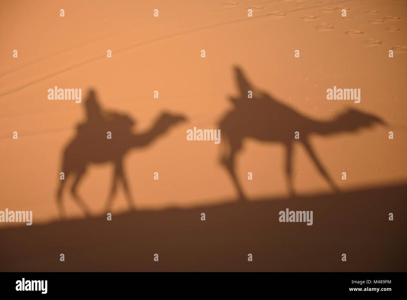 Camel shadows on Sahara Desert sand in Morocco. Stock Photo