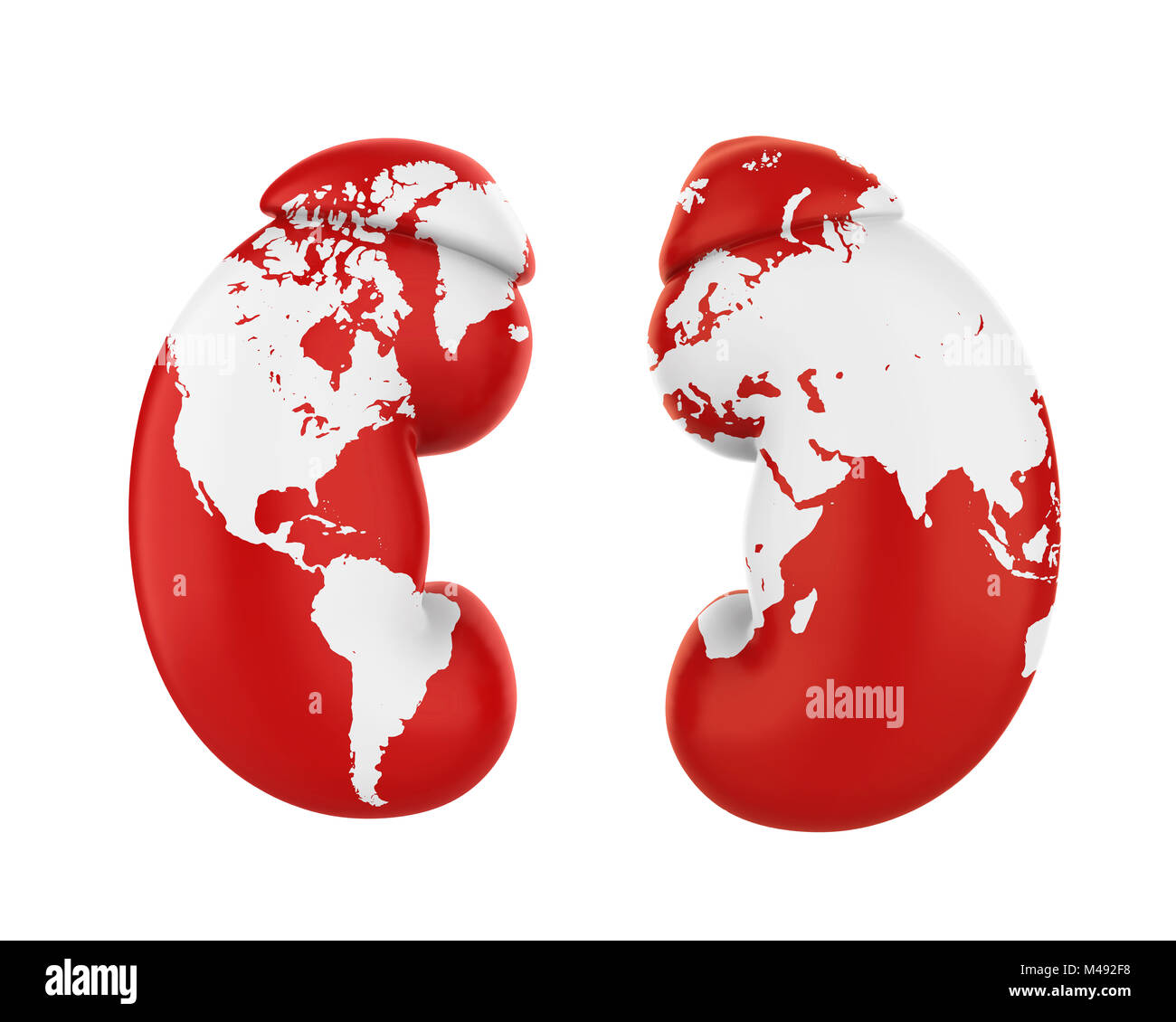 Human Kidneys with World Map. World Kidney Day Concept - Stock Image
