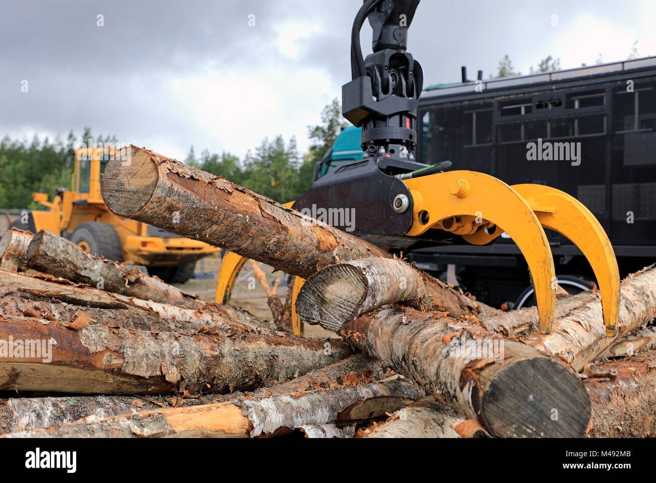 Log loader grapple attachment unloads wooden logs at a work site with heavy machinery on the background. - Stock Image
