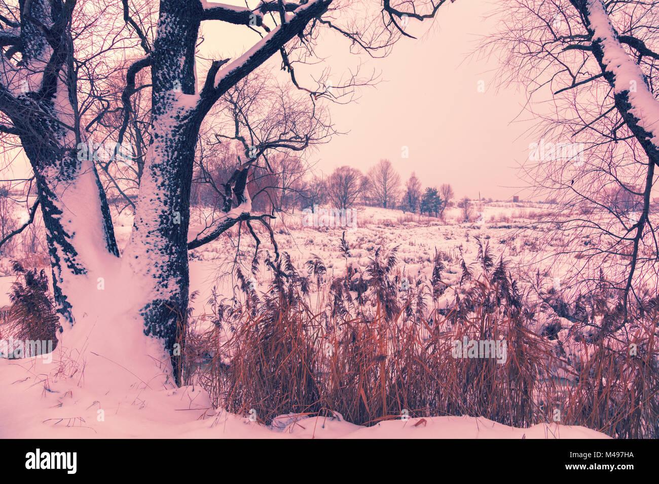 Snowy rural landscape. Tree near frozen lake - Stock Image