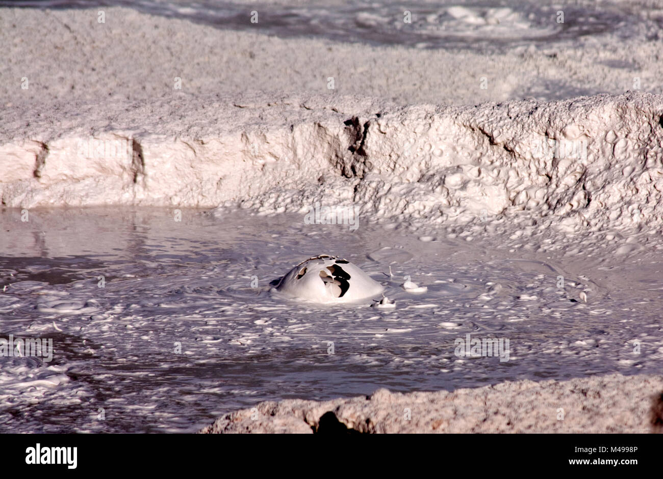 Bursting bubbles of mud, Fountain Paint Pots Trail, Yellowstone National Park, USA - Stock Image