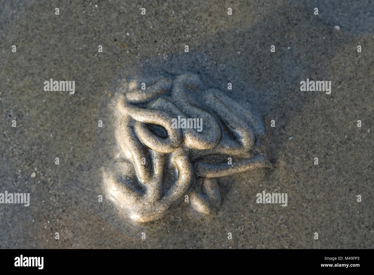 Lugworm casts on a beach in West Wittering, UK - Stock Image