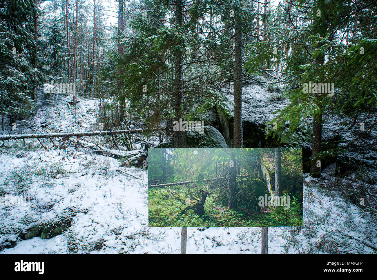 Landscape through changing seasons - photograph by Pal Hermansen 'The passage of time' of the same woodland - Stock Image