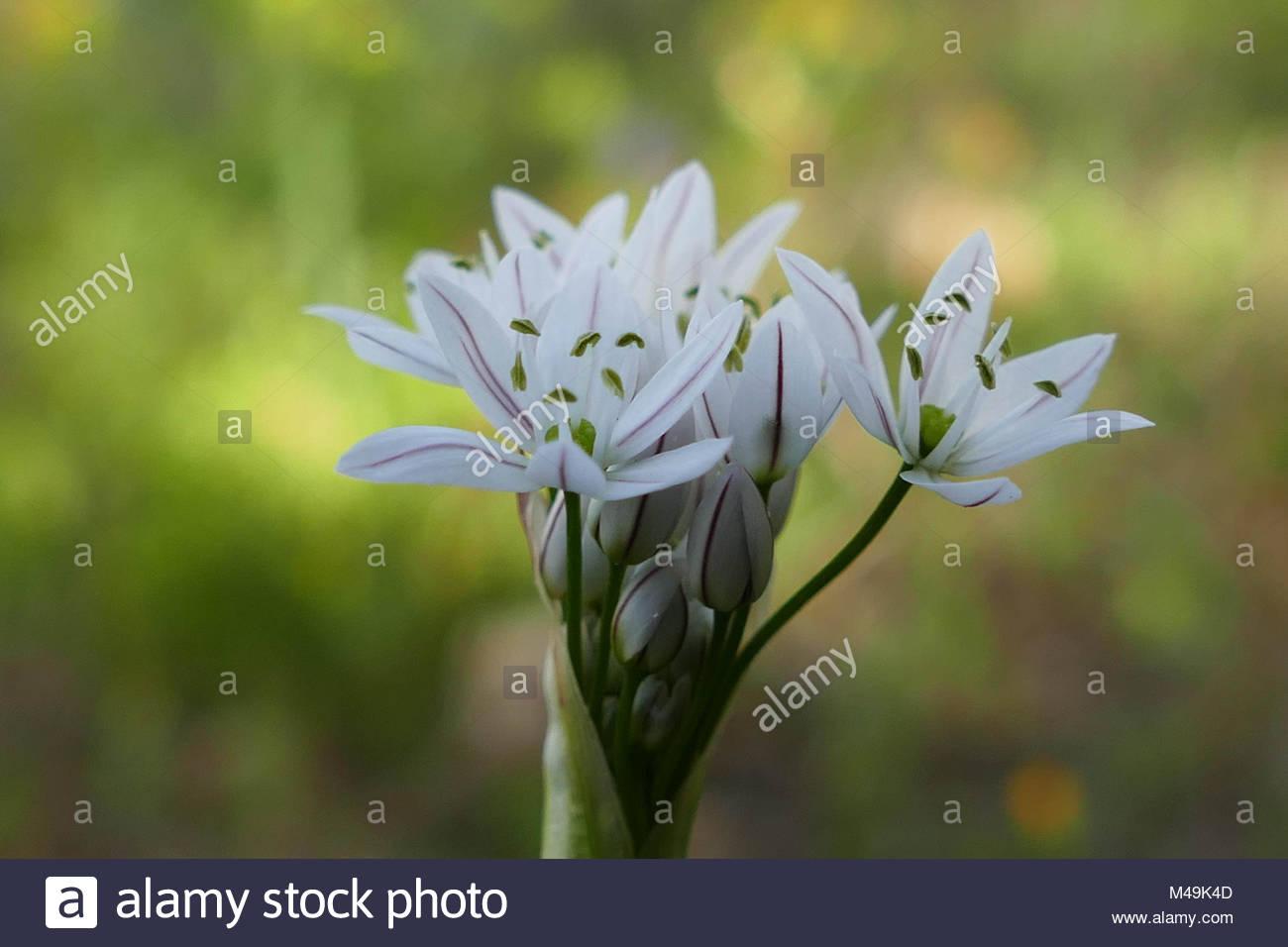 Big White Flowers Stock Photos Big White Flowers Stock Images Alamy