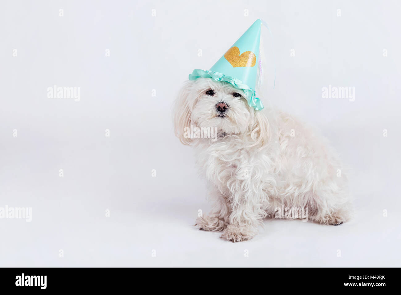 funny dog with hat - Stock Image