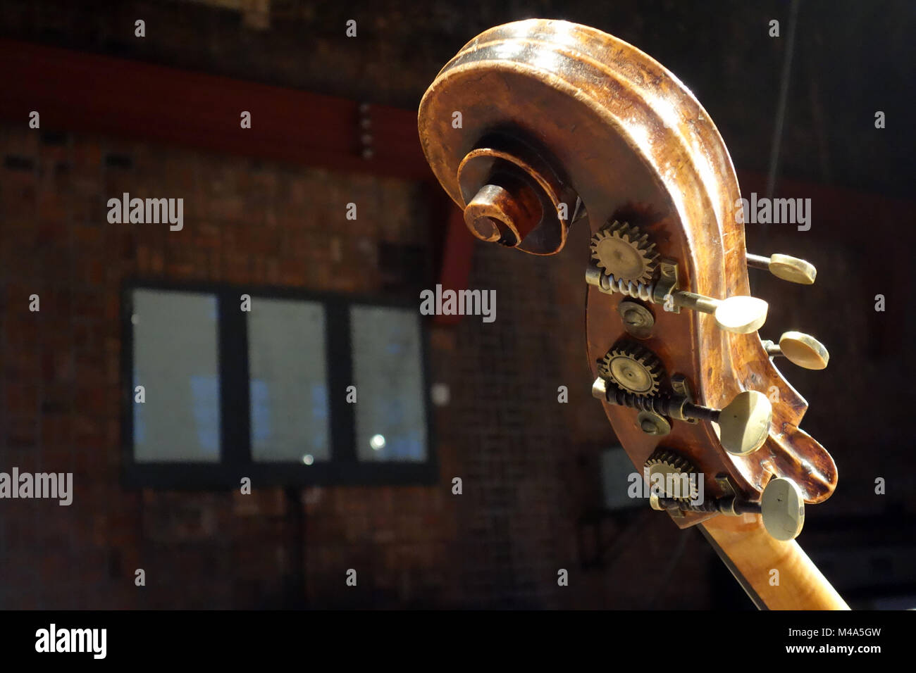 Contrabass, snail at the end of the vertebral column - Stock Image