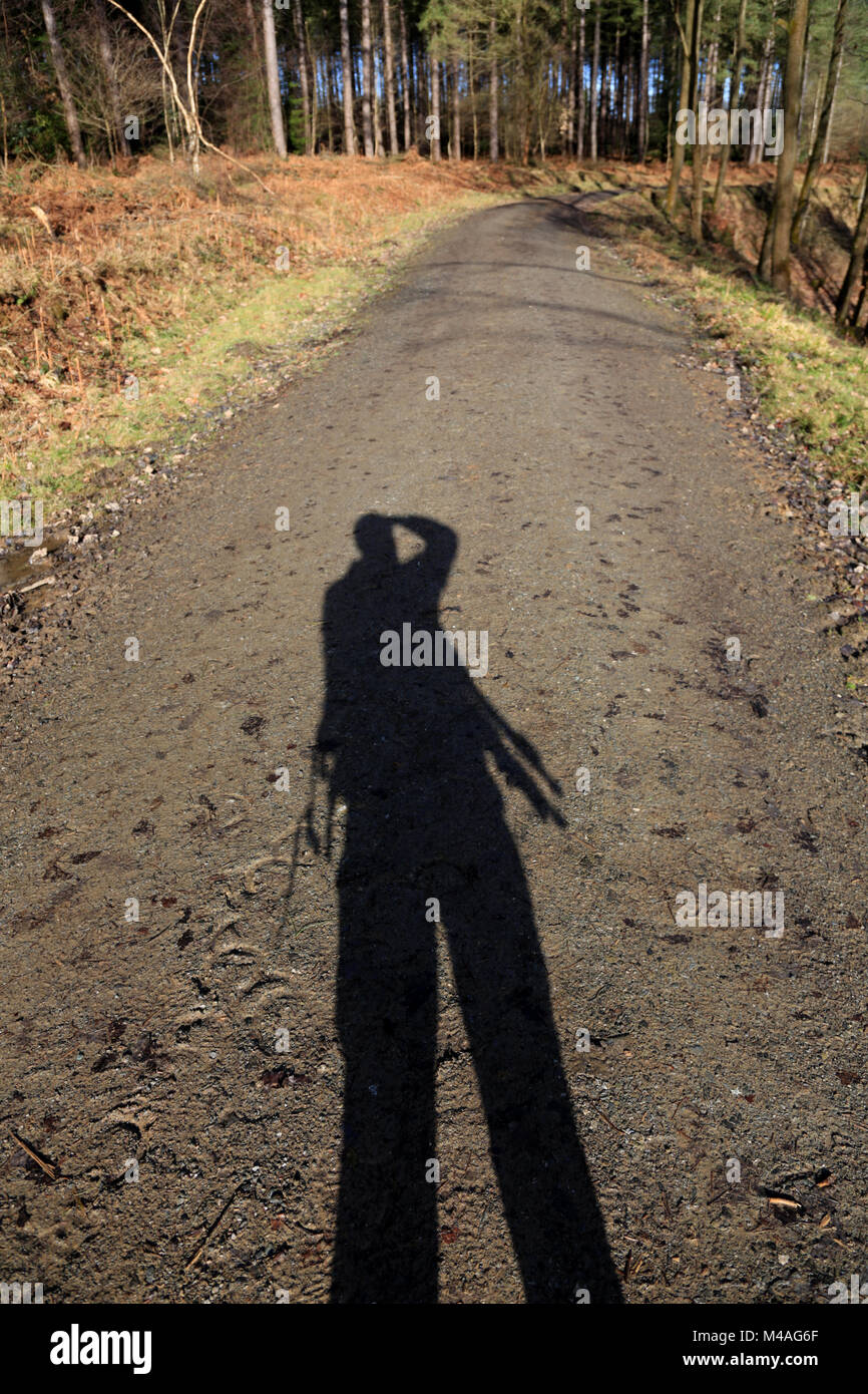 Shadow of a photographer cast onto a forest track on a sunny day. Stock Photo
