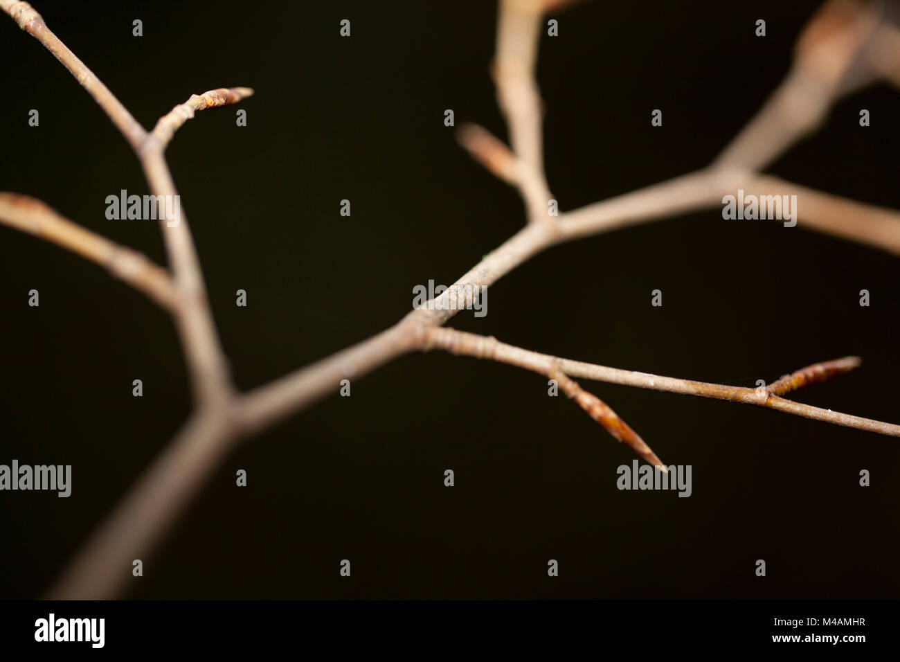 autumnal branch - Stock Image