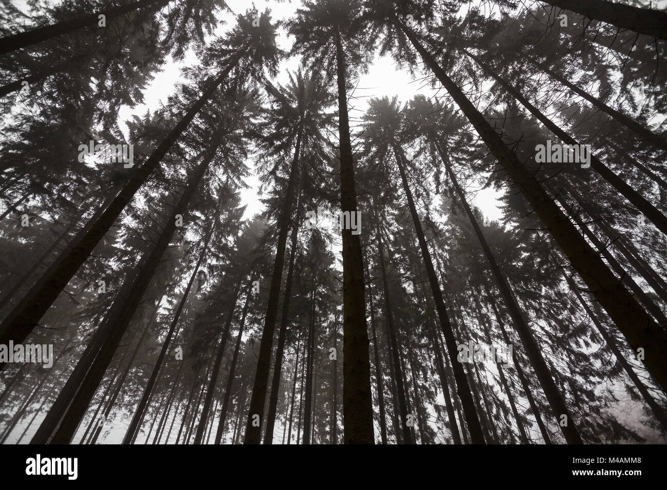 Traumatic forest Stock Photo
