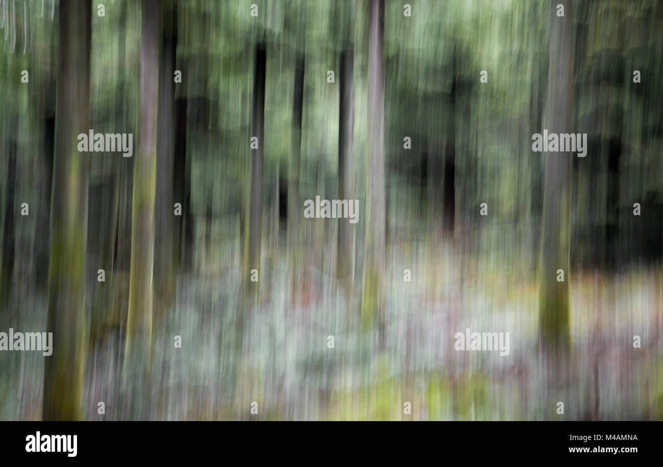 Traumatic forest - Stock Image