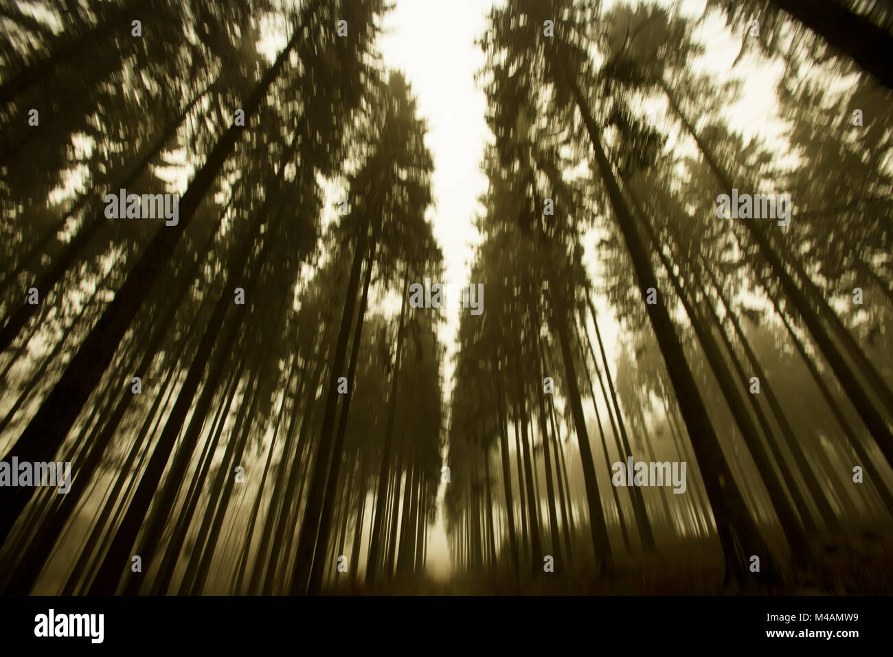 Traumatic path in a forest Stock Photo