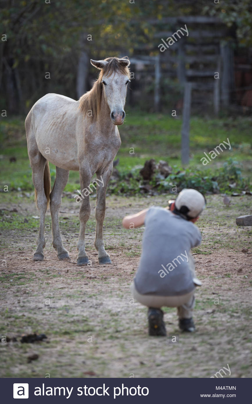 Woman squatting to take picture of horse - Stock Image