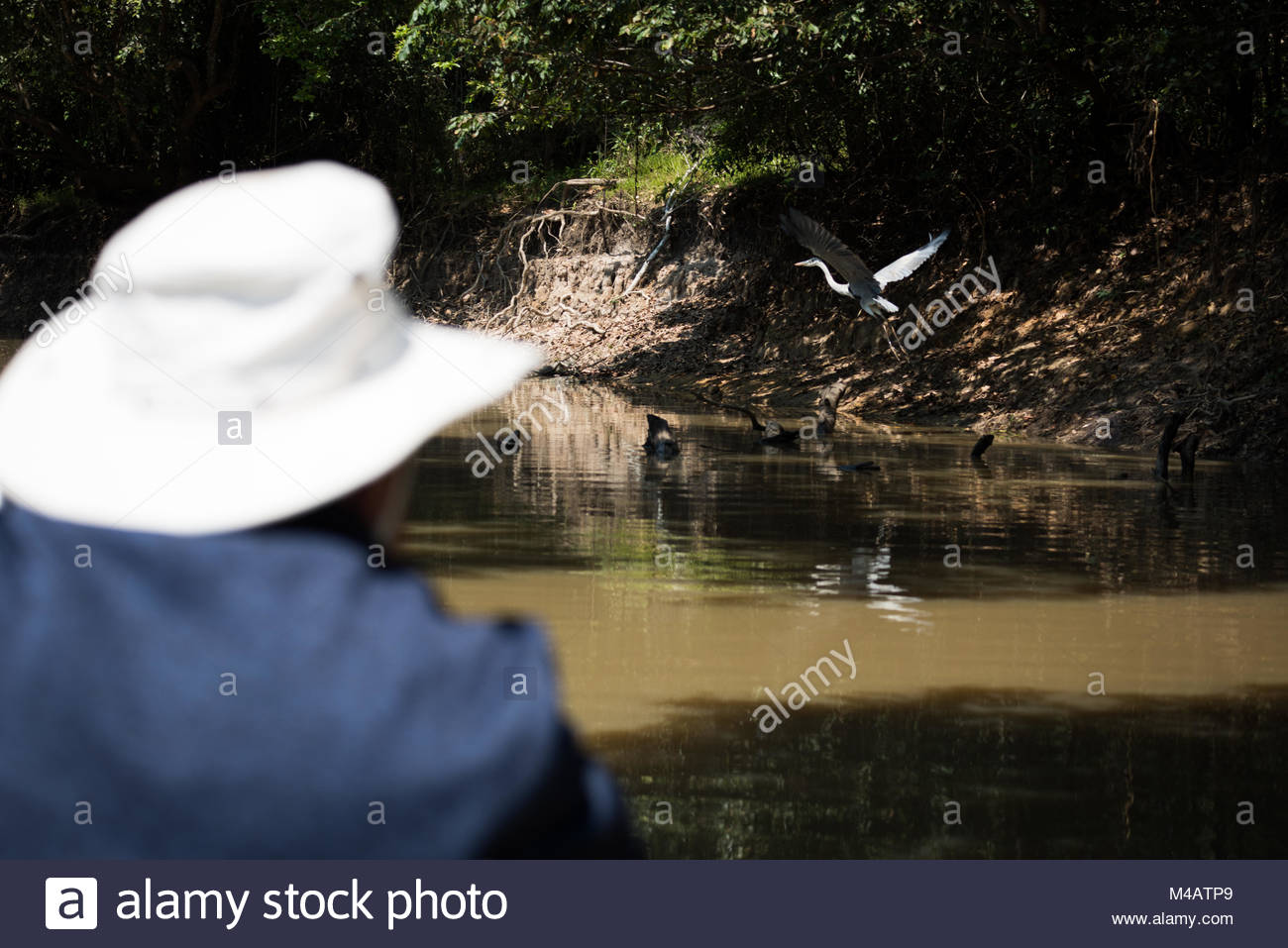 Cocoi heron watched by man in boat - Stock Image