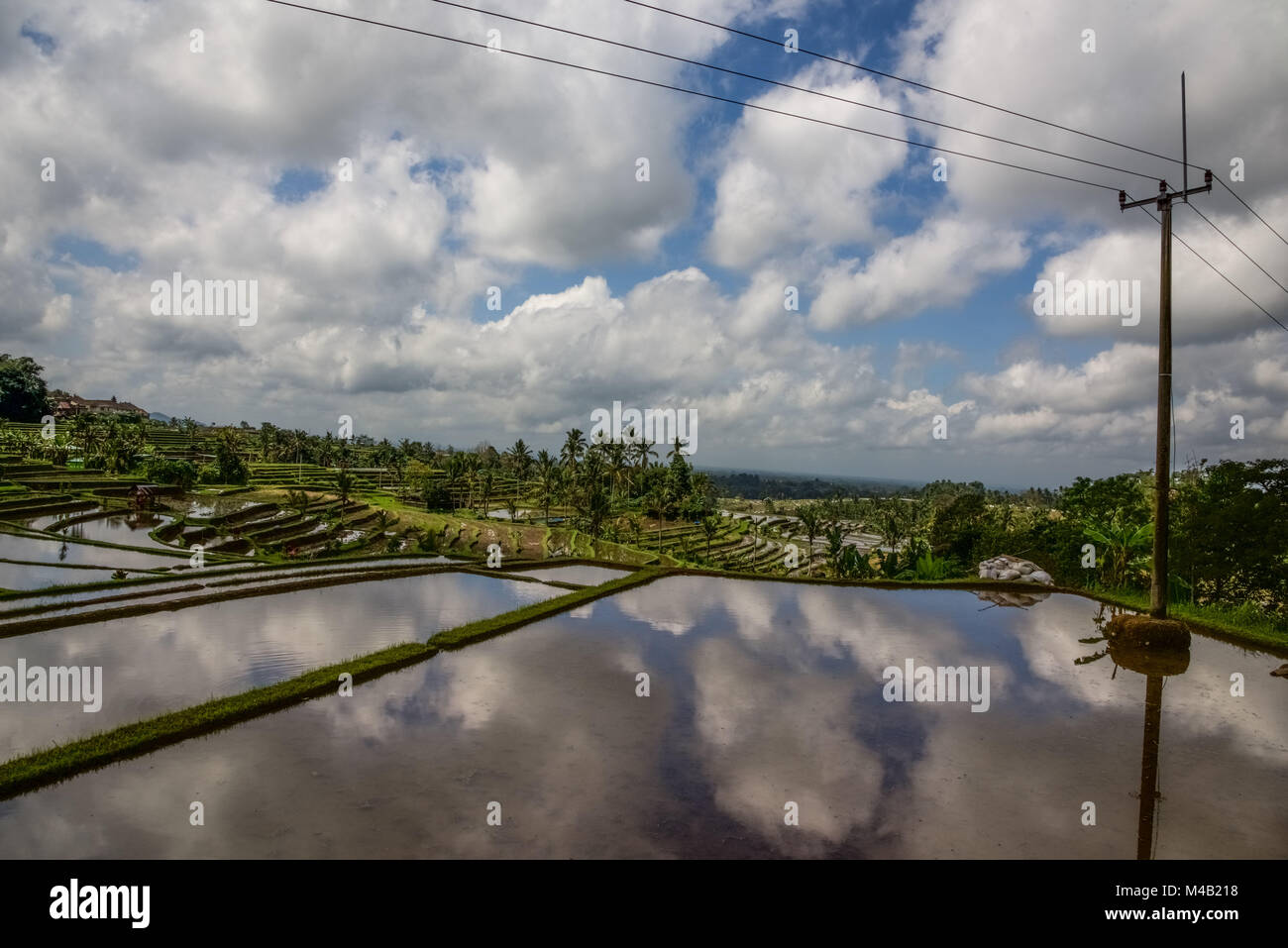 Rice terraces on Bali,Indonesia - Stock Image