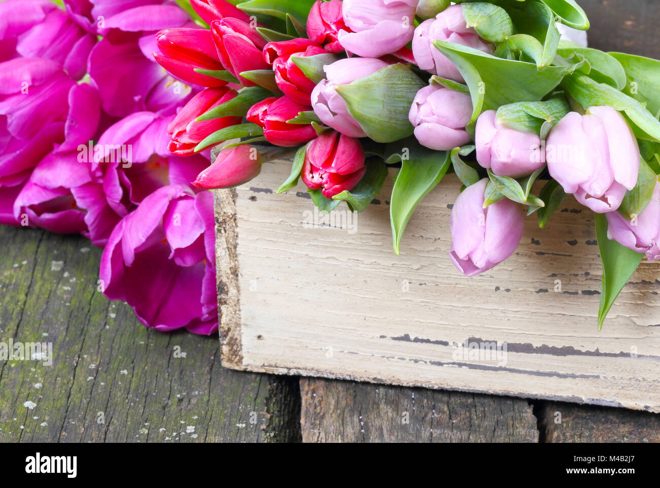 Tulips on wooden table - Stock Image