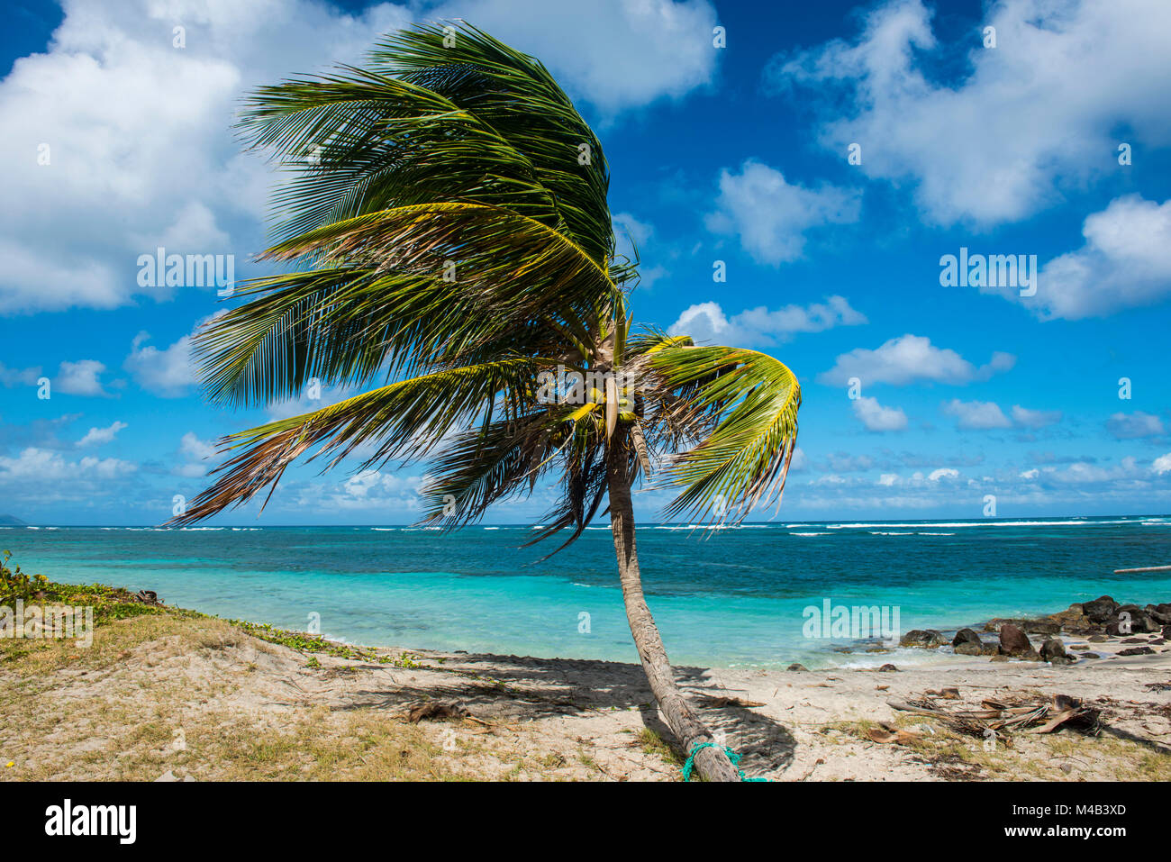 Beach at long haul bay Nevis island,St.Kitts and Nevis,Caribbean - Stock Image