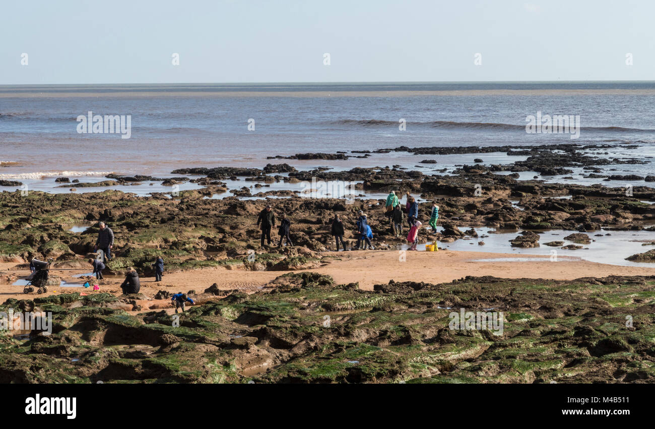People enjoy rock pooling on the beach at Sidmouth, Devon, in warm February weather. - Stock Image