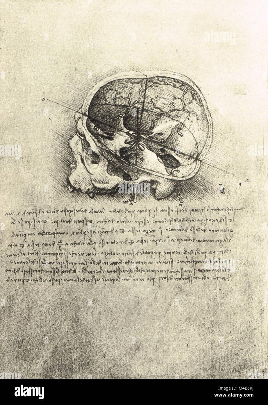 Anatomical study of a skull from the left, drawn by Leonardo Da Vinci, circa 1489 - Stock Image