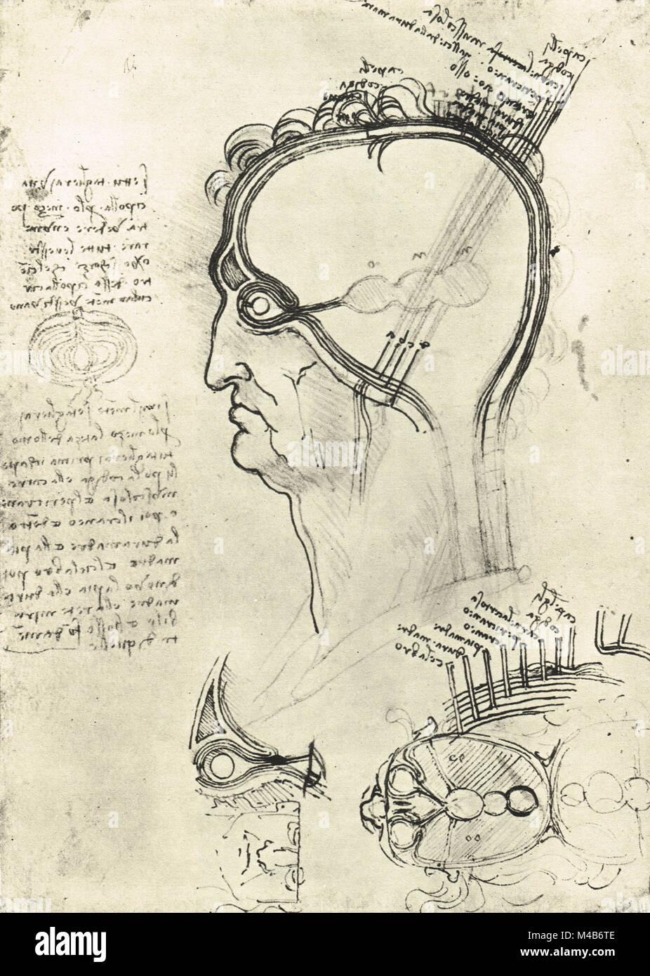Sections of a Man's head, showing the anatomy of the eye, drawn by Leonardo Da Vinci, circa 1500 - Stock Image