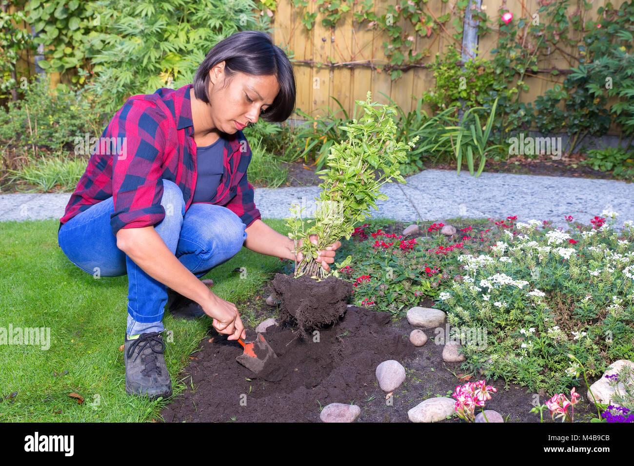 Сонник трактует растение как символ жизни, эволюции внутреннего мира, духовного и физического роста.