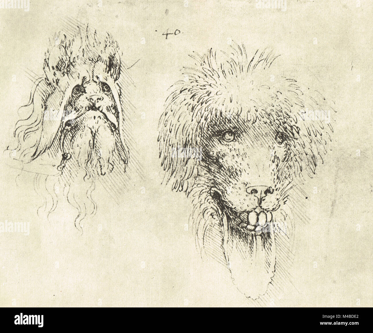 Two monsters drawn by Leonardo Da Vinci, 1452 – 1519 - Stock Image