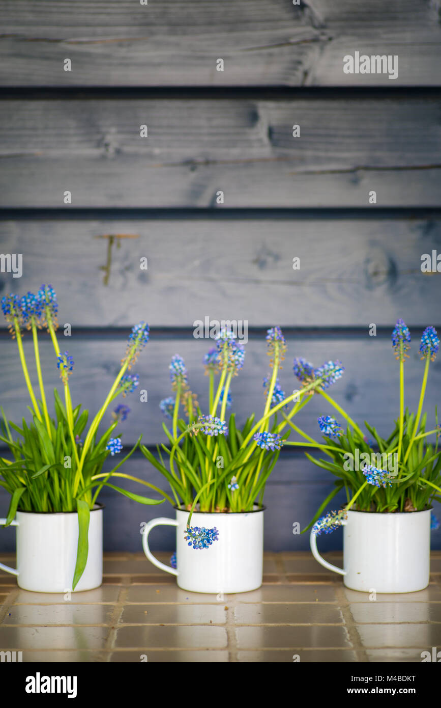 Spring Decoration Stock Photo 174814524 Alamy