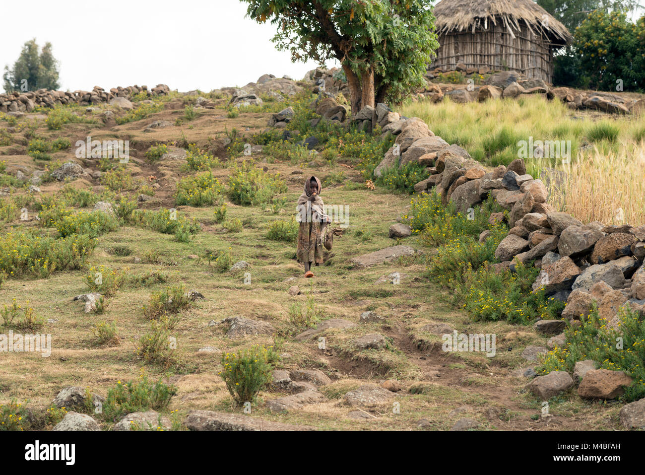 A young indigenous Tigrayan (Tigray) girl walking home in a remote village in northern Ethiopia. - Stock Image