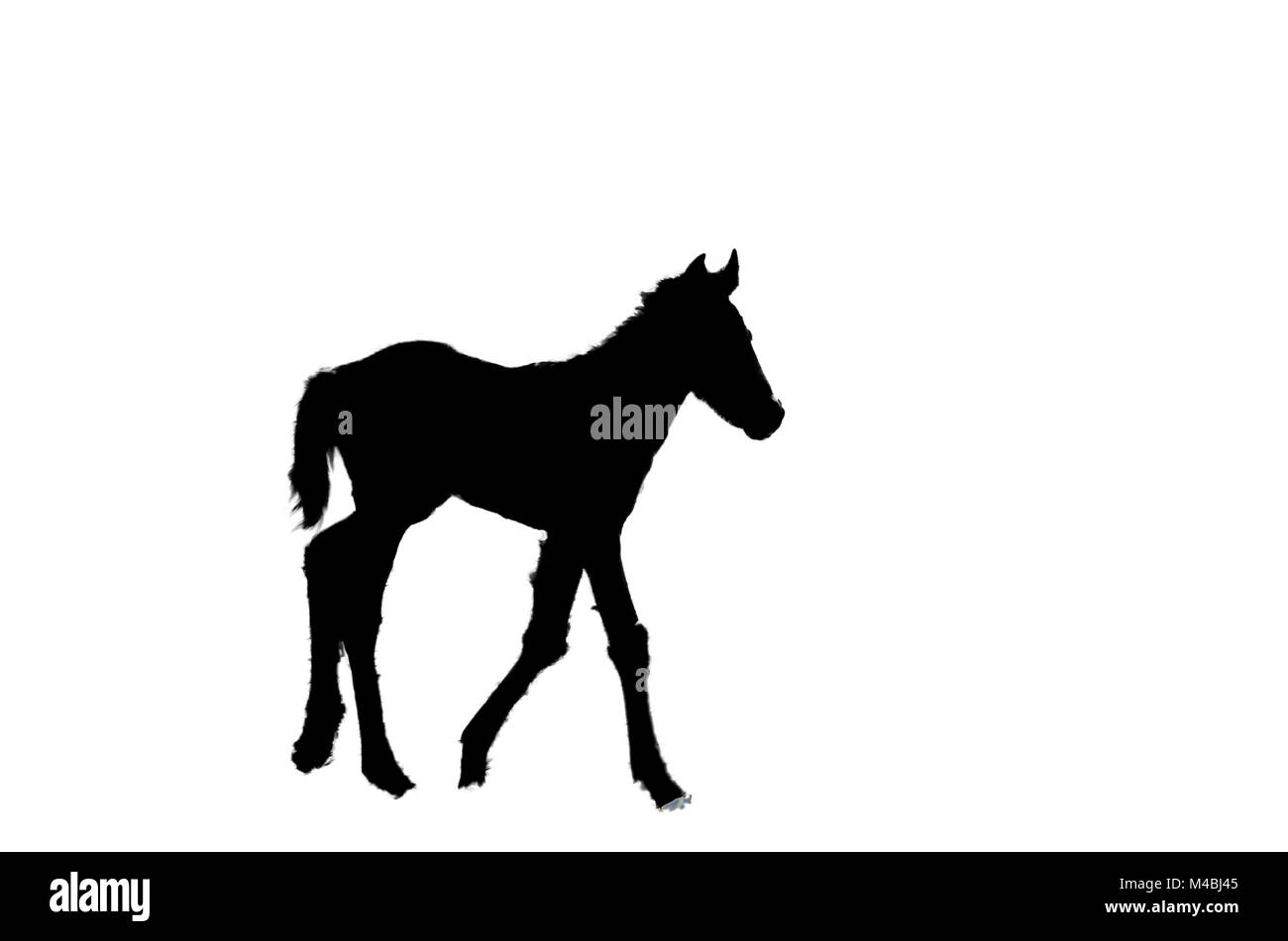 silhouette of a little foal on white isolated background Stock Photo