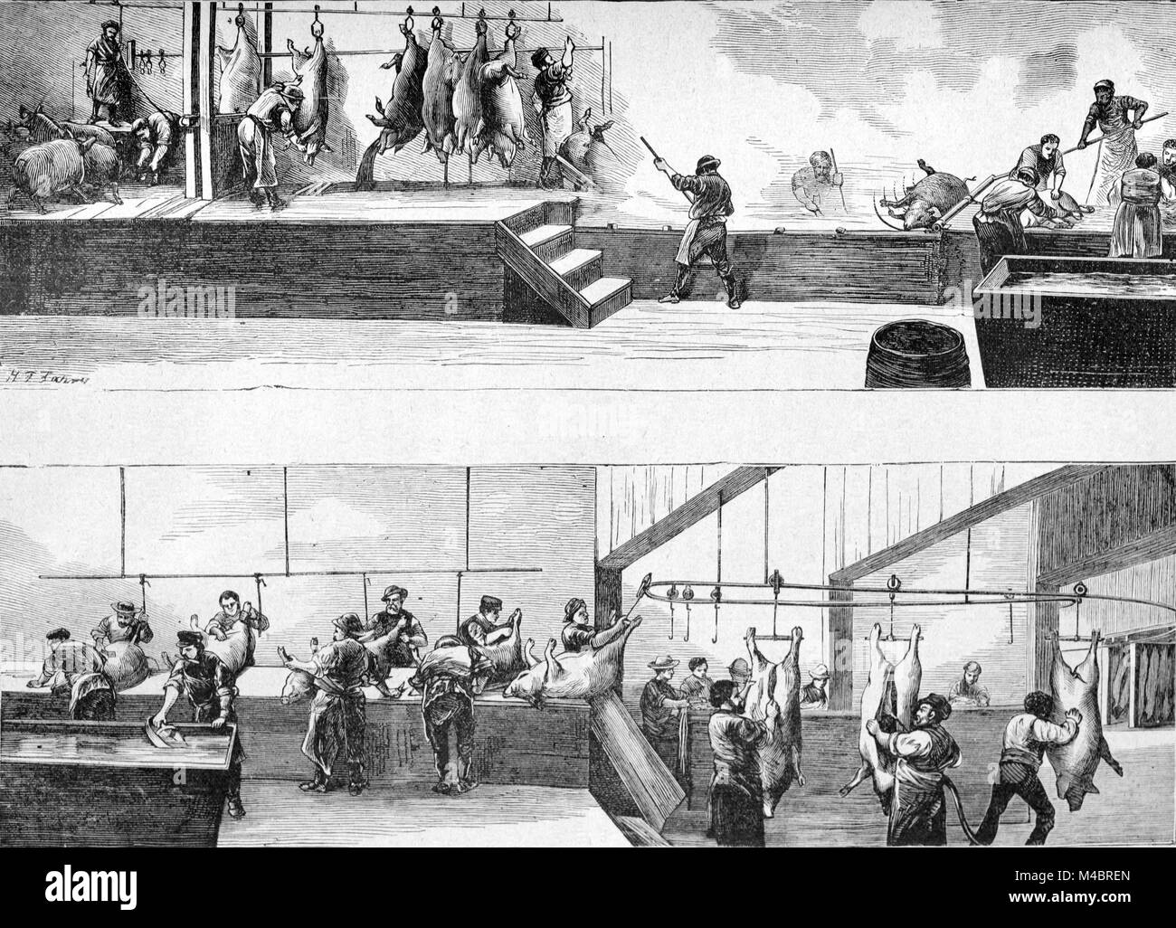 Abattoir or Pig Slaughter House Cincinnati Ohio United States (Engraving, 1880) - Stock Image
