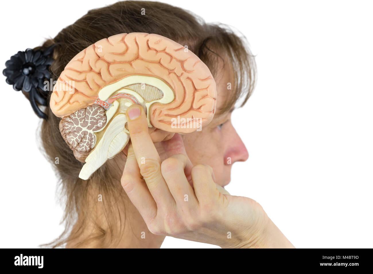 Woman holding hemisphere model  against head on white - Stock Image
